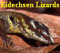 Eidechsen Lizards